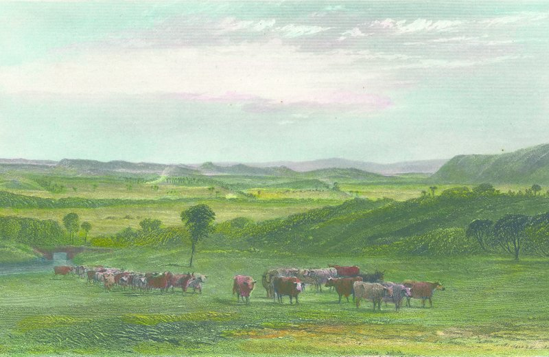 An early view of the Cowpastures